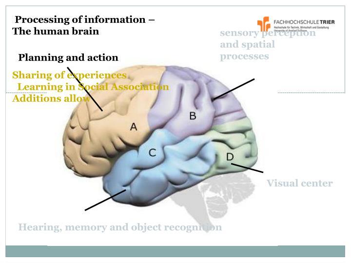 sensory perception and spatial processes