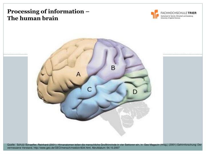 Processing of information –