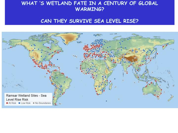 WHAT 'S WETLAND FATE IN A CENTURY OF GLOBAL WARMING?