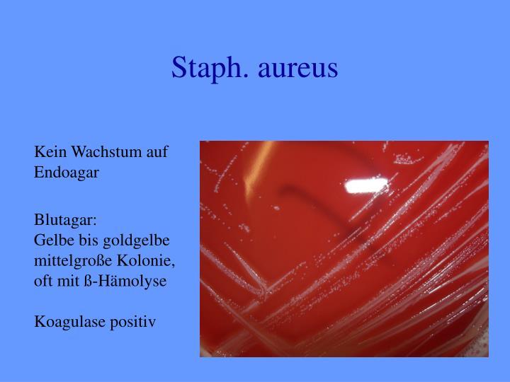 Staph. aureus