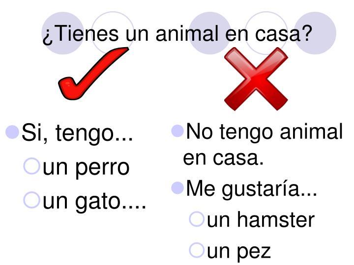 ¿Tienes un animal en casa?