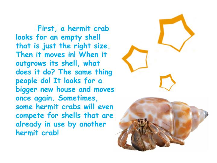 First, a hermit crab looks for an empty shell that is just the right size. Then it moves in! When it outgrows its shell, what does it do? The same thing people do! It looks for a bigger new house and moves once again. Sometimes, some hermit crabs will even compete for shells that are already in use by another hermit crab!