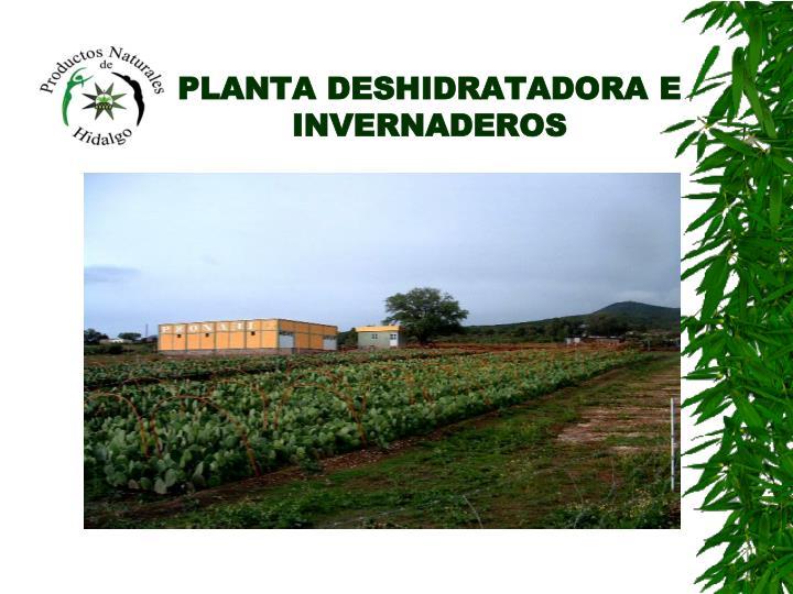 PLANTA DESHIDRATADORA E INVERNADEROS