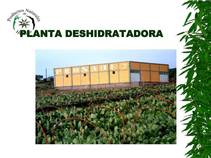 PLANTA DESHIDRATADORA
