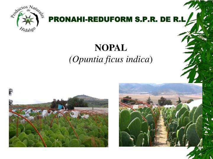 PRONAHI-REDUFORM S.P.R. DE R.L