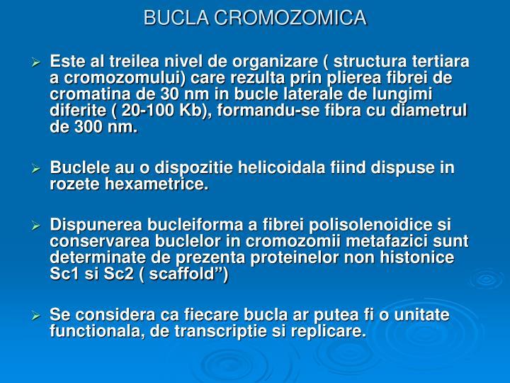 BUCLA CROMOZOMICA