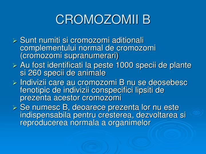 CROMOZOMII B