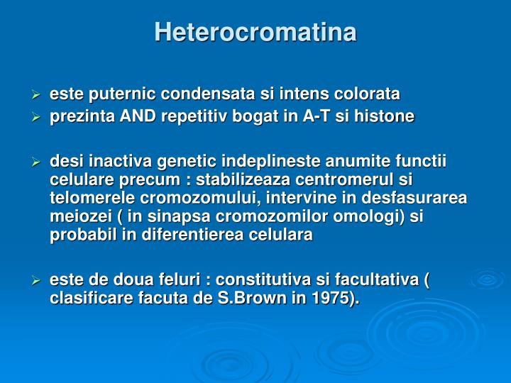 Heterocromatina