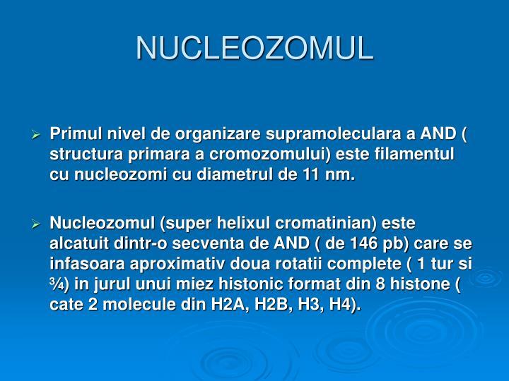 NUCLEOZOMUL