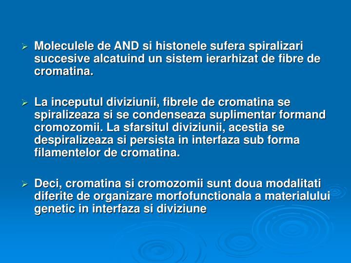 Moleculele de AND si histonele sufera spiralizari succesive alcatuind un sistem ierarhizat de fibre de cromatina.