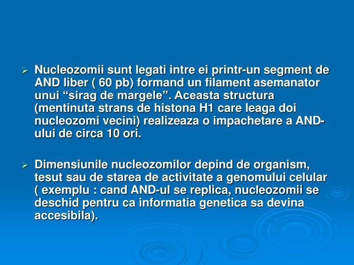 """Nucleozomii sunt legati intre ei printr-un segment de AND liber ( 60 pb) formand un filament asemanator unui """"sirag de margele"""". Aceasta structura (mentinuta strans de histona H1 care leaga doi nucleozomi vecini) realizeaza o impachetare a AND-ului de circa 10 ori."""