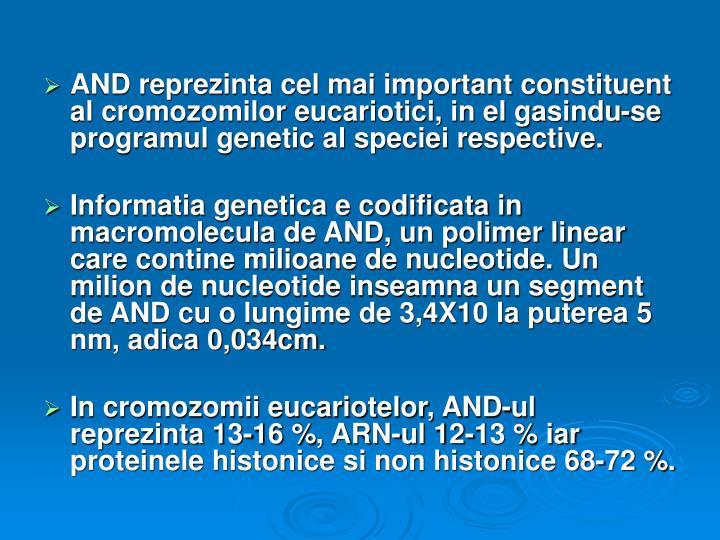 AND reprezinta cel mai important constituent al cromozomilor eucariotici, in el gasindu-se programul genetic al speciei respective.