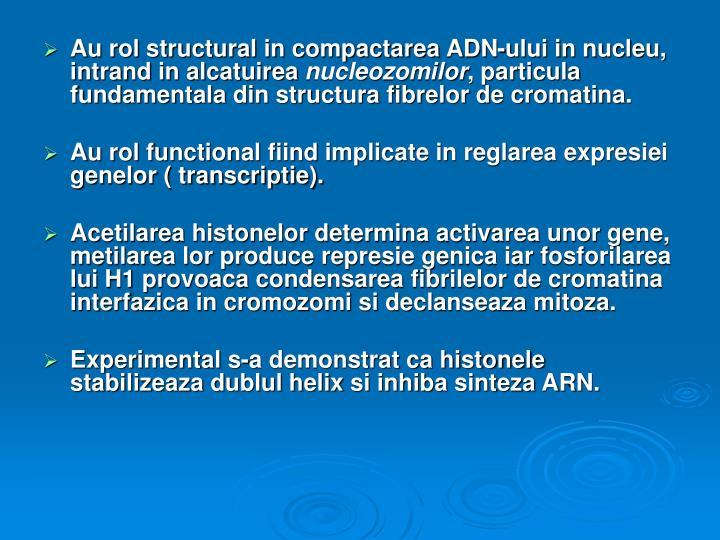 Au rol structural in compactarea ADN-ului in nucleu, intrand in alcatuirea