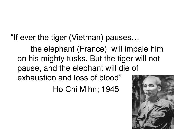 """If ever the tiger (Vietman) pauses…"