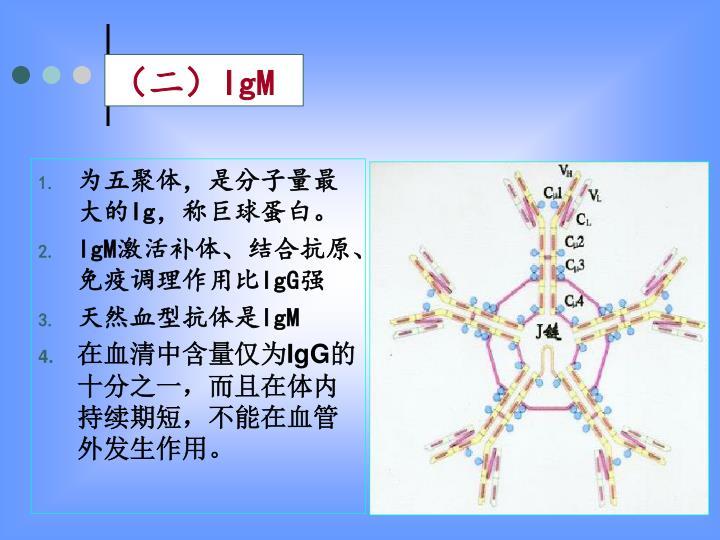 为五聚体,是分子量最大的