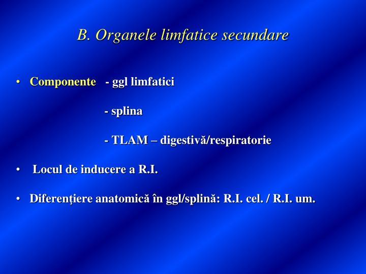 B. Organele limfatice secundare
