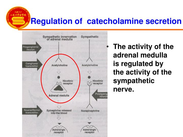 Regulation of  catecholamine secretion