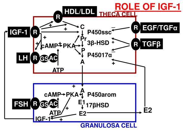 ROLE OF IGF-1