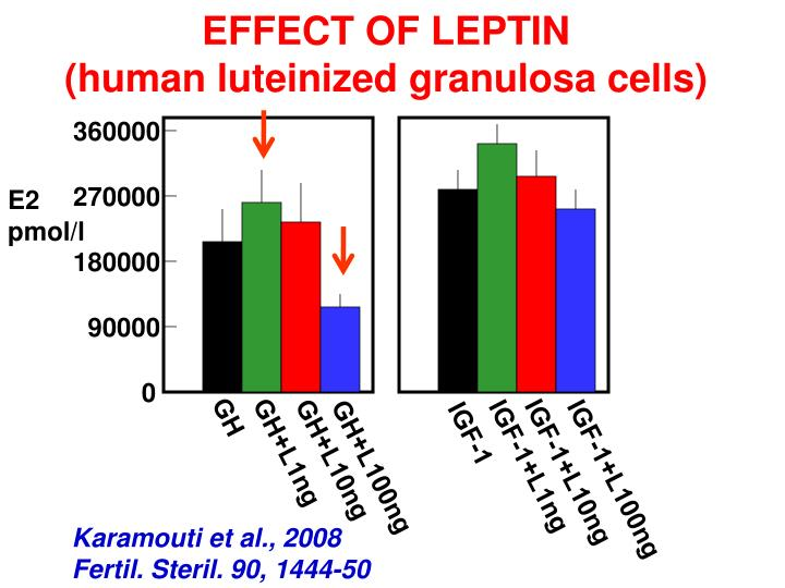 EFFECT OF LEPTIN