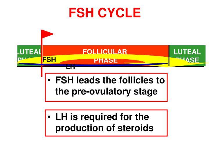 FSH CYCLE