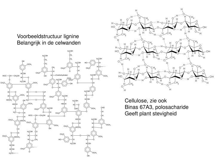Voorbeeldstructuur lignine