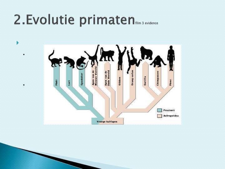 2.Evolutie primaten