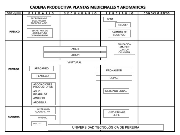 CADENA PRODUCTIVA PLANTAS MEDICINALES Y AROMATICAS