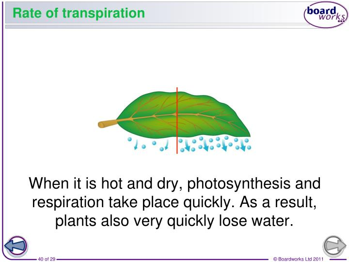 When it is hot and dry, photosynthesis and