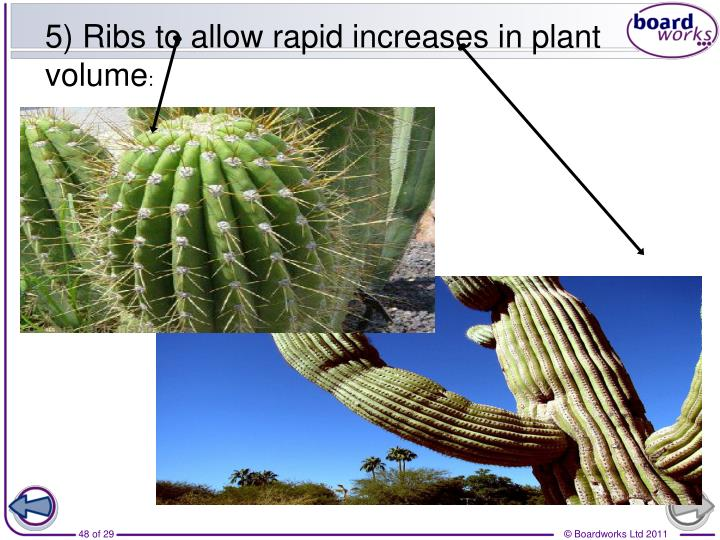 5) Ribs to allow rapid increases in plant volume