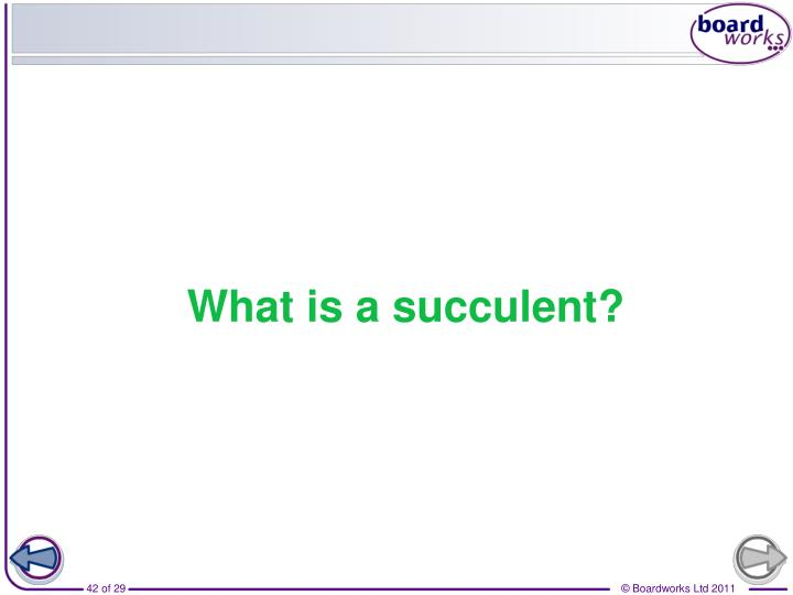 What is a succulent?
