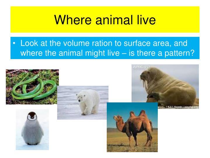 Where animal live