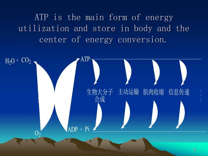 ATP is the main form of energy utilization and store in body and the center of energy conversion.