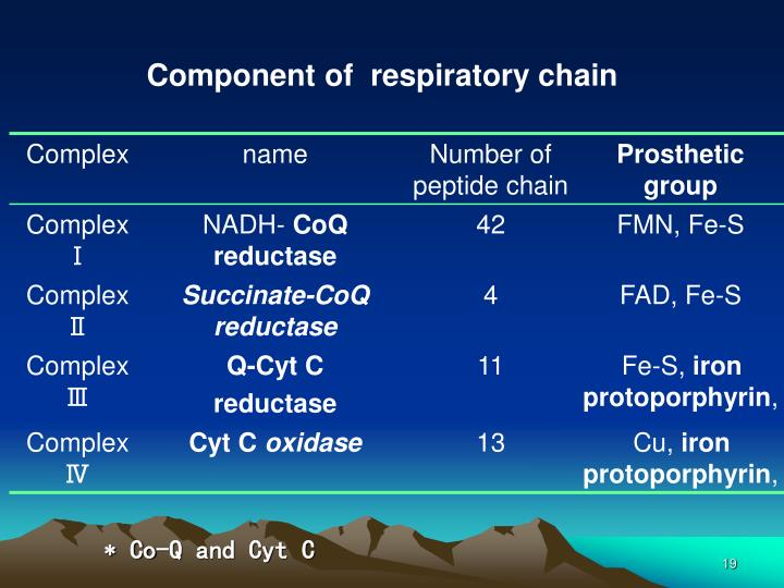 Component of  respiratory chain