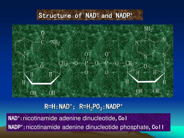 Structure of NAD