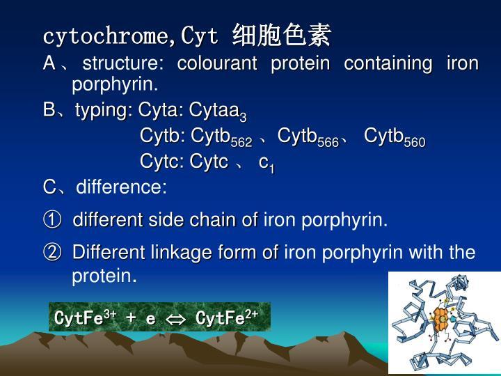 cytochrome,Cyt