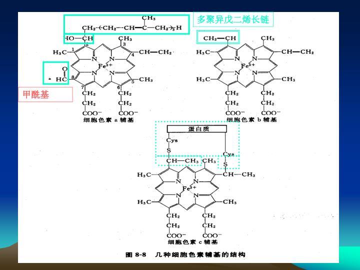多聚异戊二烯长链