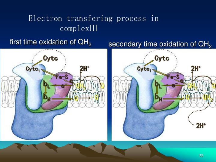 Electron transfering process in complexⅢ