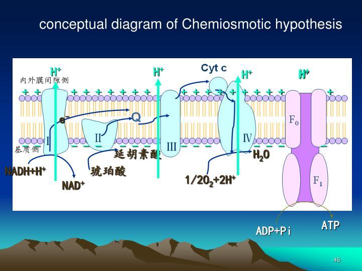 conceptual diagram of Chemiosmotic hypothesis