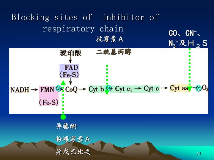 Blocking sites of  inhibitor