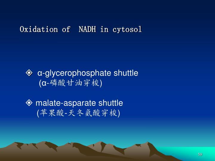 Oxidation of  NADH in cytosol