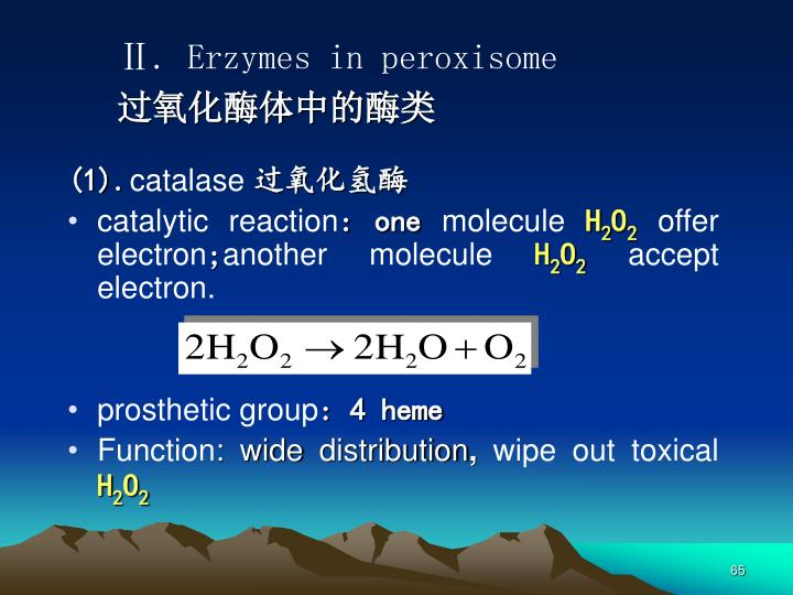 Ⅱ. Erzymes in peroxisome