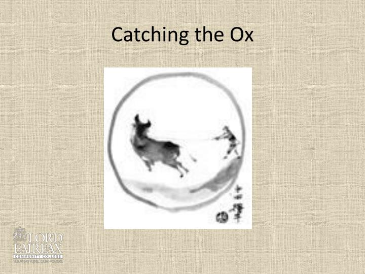 Catching the Ox