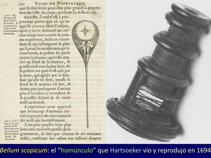 Bellum scopicum