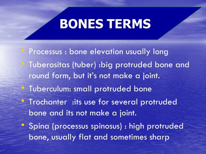 BONES TERMS