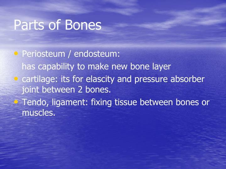 Parts of Bones