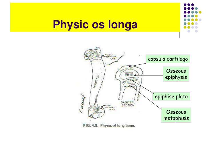 Physic os longa