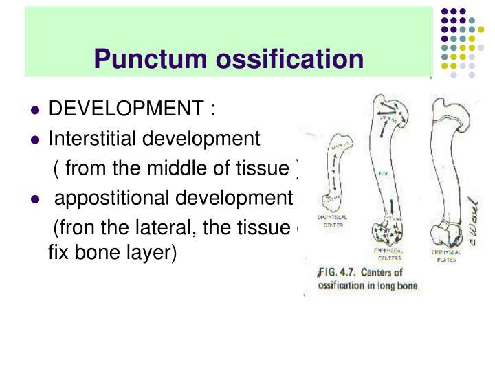 Punctum ossification