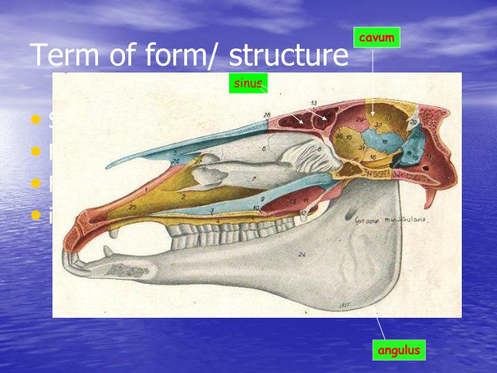 Term of form/ structure