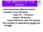 the amount of the bones