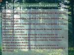 solutii pentru gestionarea durabila a padurilor